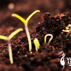 9. dan. - Izlazak na svjetlo - Dnevnik ljutog uzgajivača 10