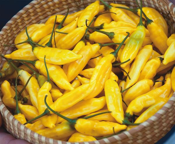 Top 5 chili papričica za uzgajivače početnike 6