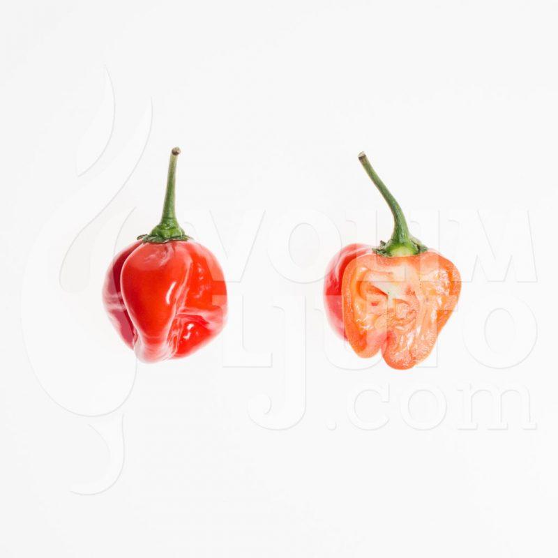 Habanero Red - VolimLjuto.com