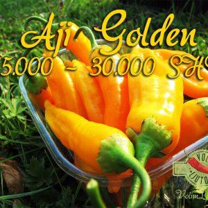 Aji Golden - svježe chili papričice 13