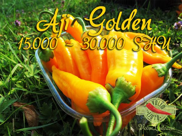 Aji Golden - svježe chili papričice 8