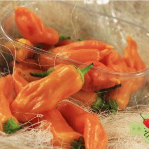 Aji Golden - svježe chili papričice 12