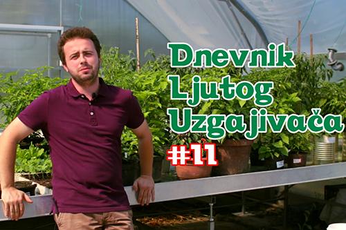 Dnevnik Ljutog Uzgajivača 11 - VolimLjuto.com