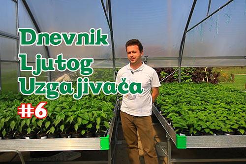 Dnevnik Ljutog Uzgajivača 6 - VolimLjuto.com