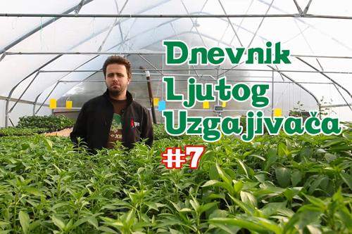 Dnevnik Ljutog Uzgajivača 7 - VolimLjuto.com