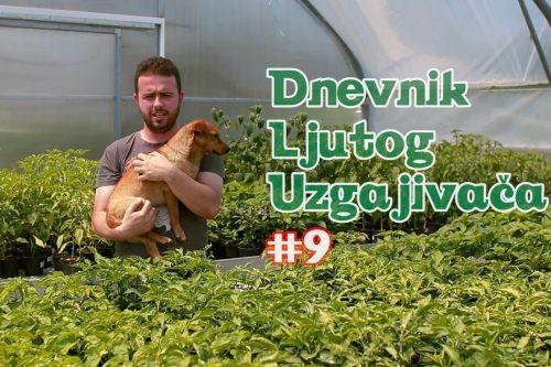 Dnevnik Ljutog Uzgajivača 9 - VolimLjuto.com