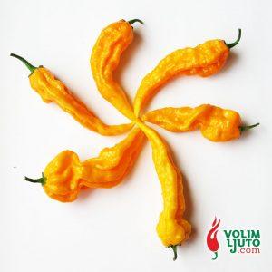 Fatalii - svježe chili papričice 9