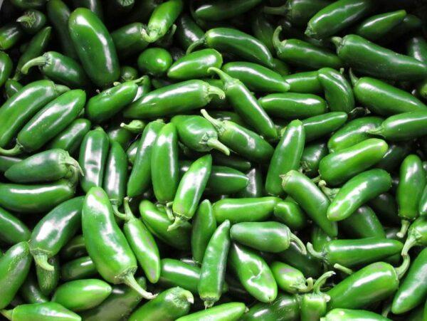 Jalapeno sadnica chili papričice 7