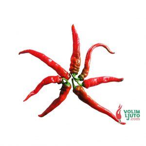 Hot Portugal- svježe papričice 900g 9