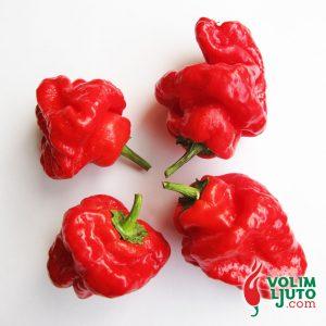 Jamaican Hot Red - svježe chili papričice 11