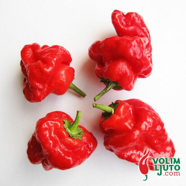Jamaican Hot Red - svježe chili papričice 6