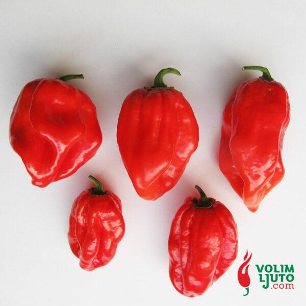 Red Savina Habanero - svježe chili papričice 5