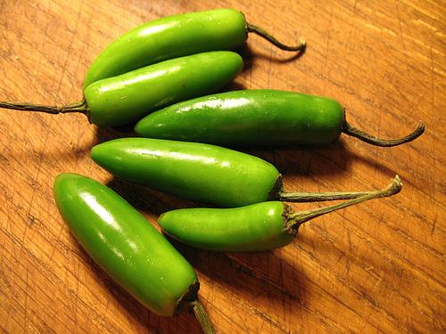 Serrano sadnica chili papričice 4