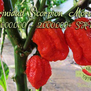 Trinidad Scorpion Moruga - svježe chili papričice 28