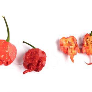 Carolina reaper - VolimLjuto.com
