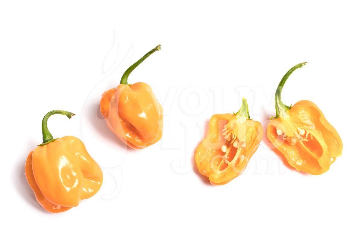 Habanero numex suave orange - VolimLjuto.com