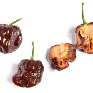 Trinidad scorpion chocolate - VolimLjuto.com
