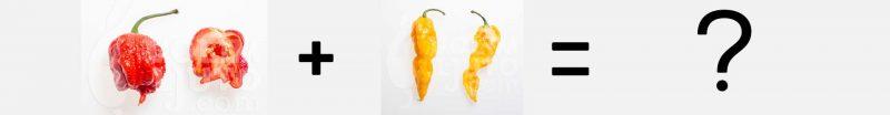 Križanje chili papričica - istina vs. mit 5