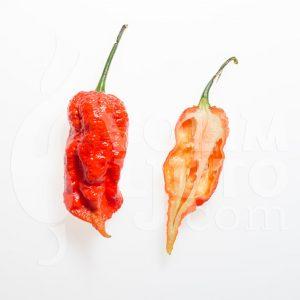 Bhut Jolokia Red - VolimLjuto.com