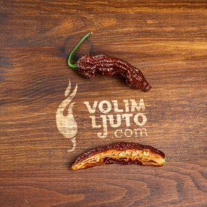 Bhut Jolokia Chocolate - svježe chili papričice 10