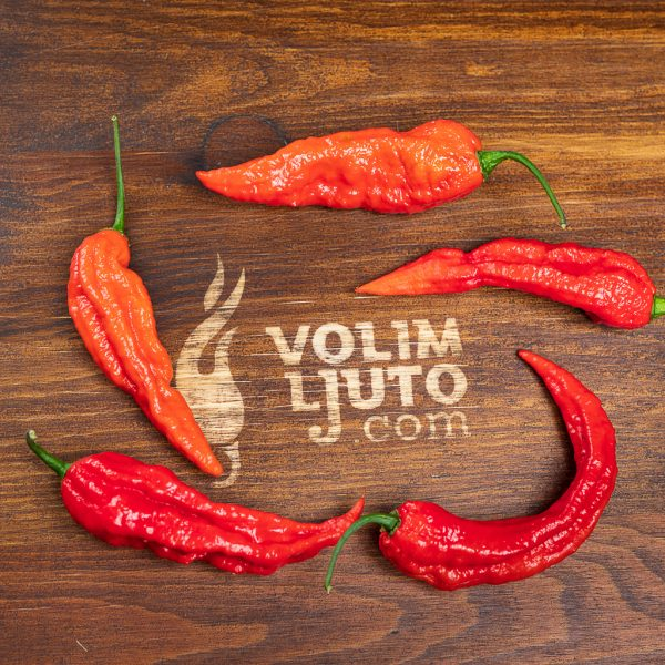 Bhut Jolokia Red - svježe chili papričice 4