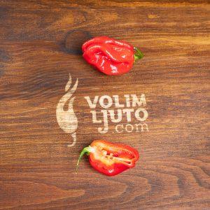 Red Savina Habanero - svježe chili papričice 8