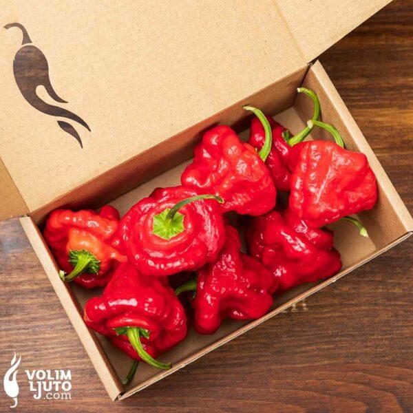 Jamaican Hot Red - svježe chili papričice 3