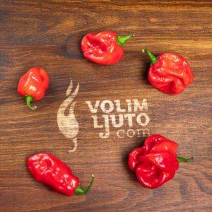 Habanero Red - svježe chili papričice 12