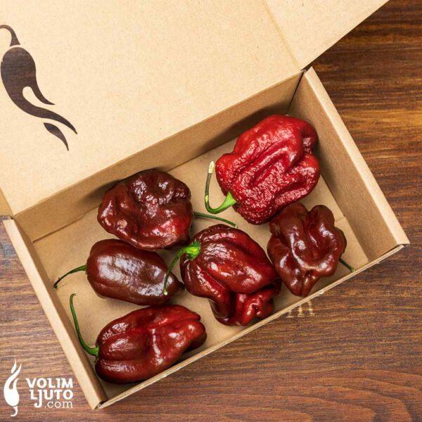 Habanero Chocolate - svježe chili papričice 3