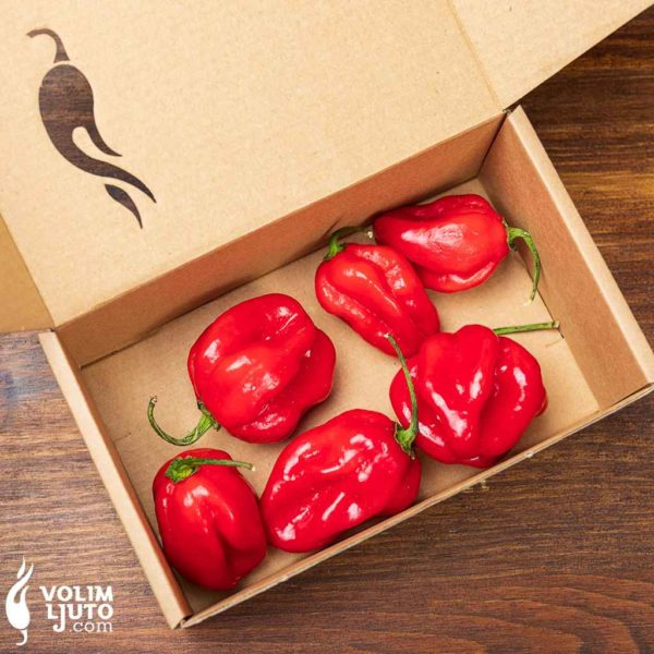 Red Savina Habanero - svježe chili papričice 3