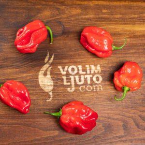 Red Savina Habanero - svježe chili papričice 10