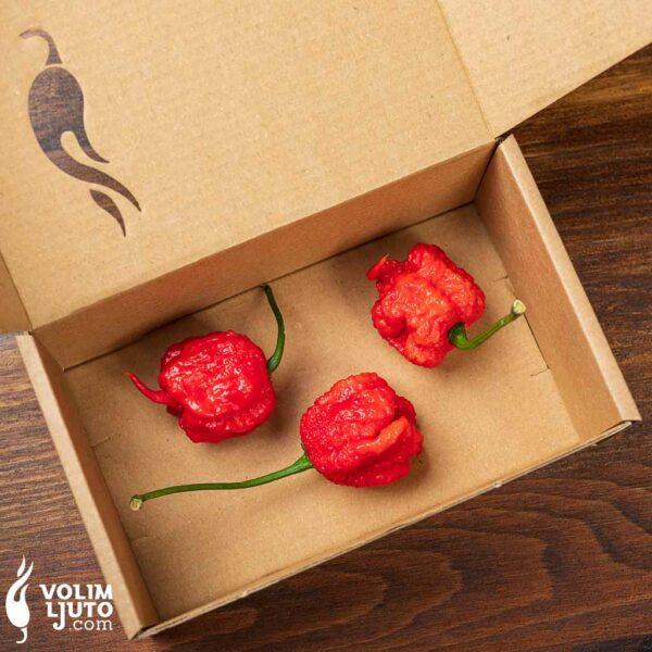 Carolina Reaper - svježe chili papričice 3