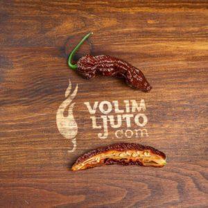 Bhut Jolokia Chocolate - svježe chili papričice 12