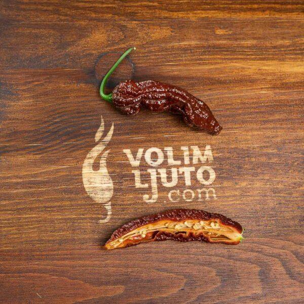 Bhut Jolokia Chocolate - svježe chili papričice 8