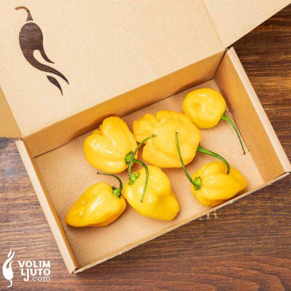 Habanero Yellow - svježe chili papričice 3