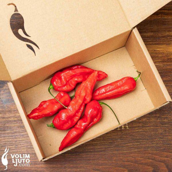 Bhut Jolokia Red - svježe chili papričice 3