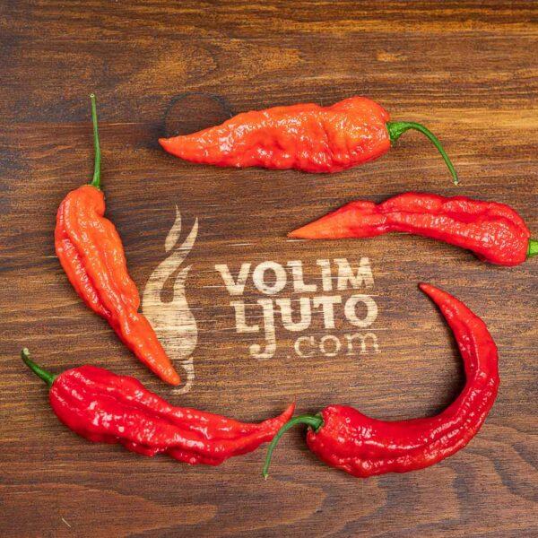 Bhut Jolokia Red - svježe chili papričice 6
