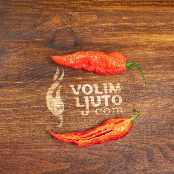 Bhut Jolokia Red - svježe chili papričice 7