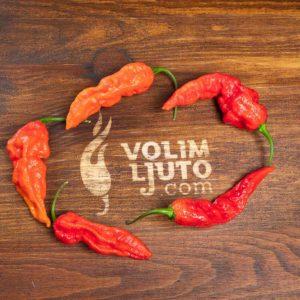 Fatalii Red - svježe chili papričice 10