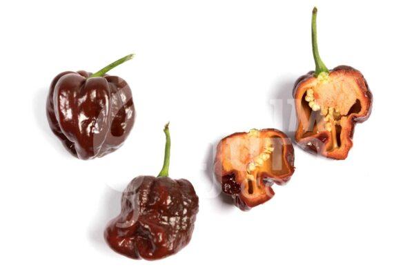 Trinidad Scorpion Chocolate - Svježi plodovi 3