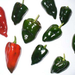 Zalijevanje chili papričica - manje je više ili više je manje? 1