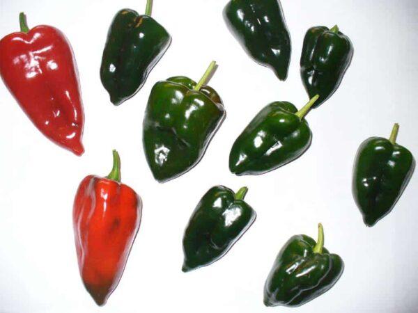 Ancho San Luis - Sjemenke chili papričica 3