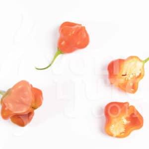 Sjemenke chili papričica - preko 50 sorti! 21