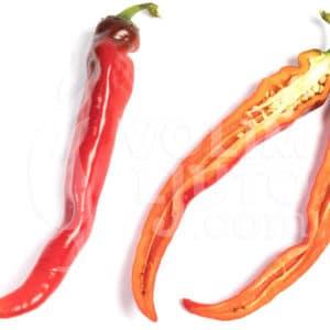 Sjemenke chili papričica - preko 50 sorti! 8