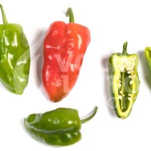 Sjemenke chili papričica - preko 50 sorti! 16
