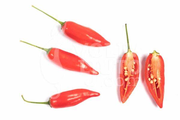 Peruvian Pointer - Sjemenke chili papričica 3
