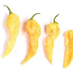 Sjemenke chili papričica - preko 50 sorti! 51