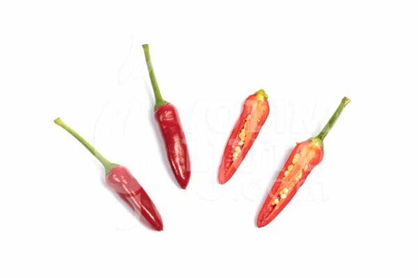 Firecracker - Sjemenke chili papričica 3