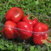 Red Savina Habanero - Sjemenke chili papričica 2