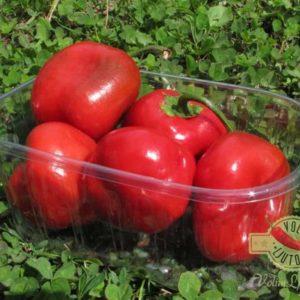 Sjemenke chili papričica - preko 50 sorti! 58
